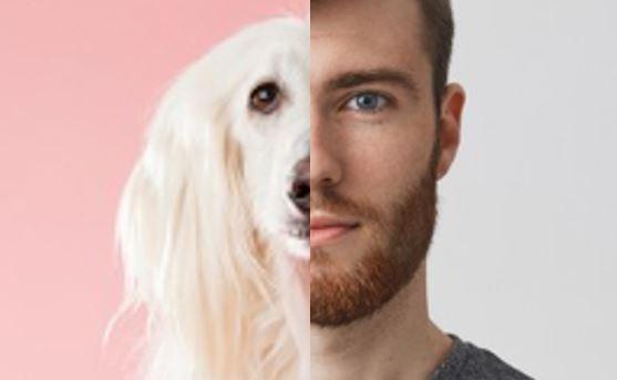 Je zaměstnanec pes? Příručka pro psovody /  manažery.